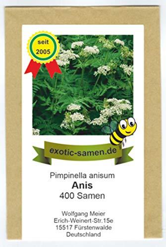 Anis - Bienenweide - Kräuter - Gewürzpflanze - Pimpinella anisum (400 Samen)